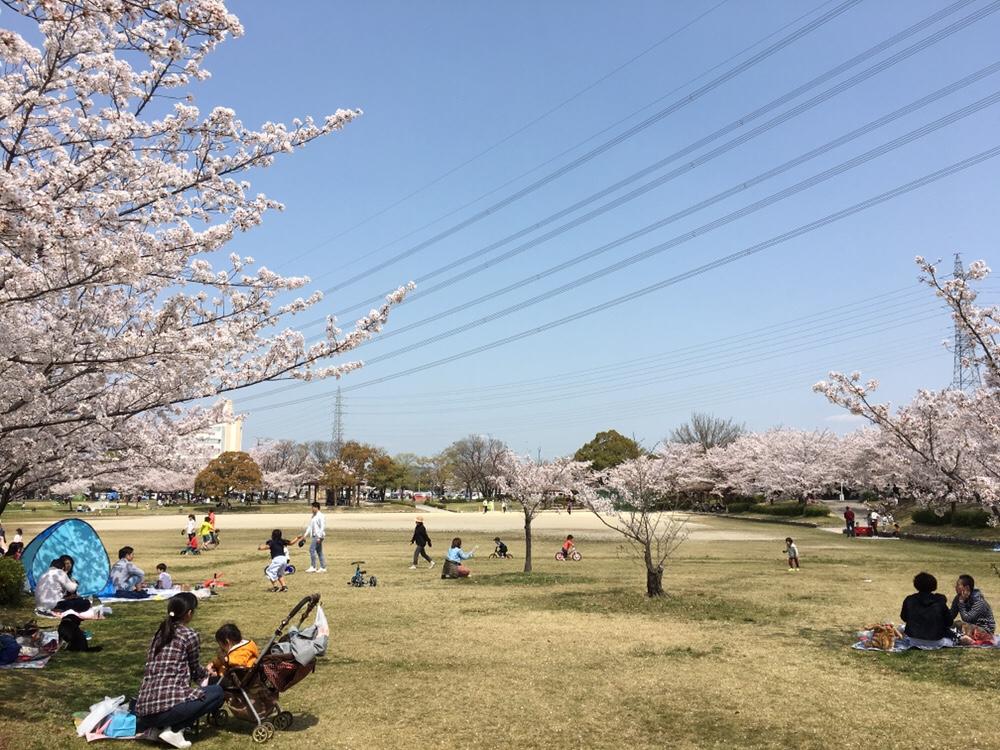 春日井市落合公園の芝生