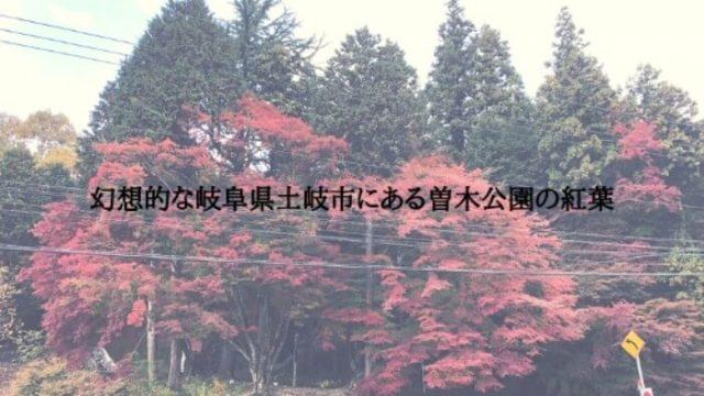 岐阜県土岐市にある曽木公園の紅葉は隠れたスポット